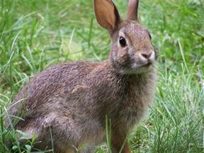 file rabbit closeup profile jpg