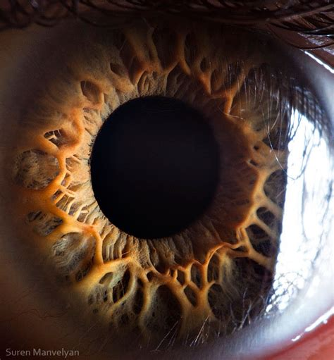 the photographers eye a the human eye as you ve never seen it this will blow your mind