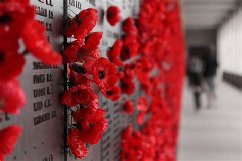 poppys funerals i soon got used to seeing dead bodies female correspondents report brits protest poppy pressure 11 11