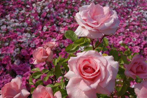 ashikaga flower park evacomics hitachi seaside park and ashikaga flower park