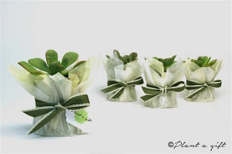 Wedding Gift Ideas Melbourne by Wedding Gift Plant Imbusy For