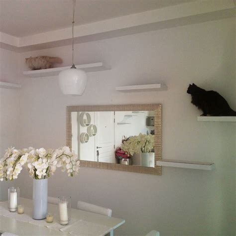 cat wall shelves modern cat tree alternatives for up to date pets