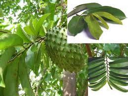 Ace Maxs Yogyakarta ace max s toko herbal terpercaya karunia herbal