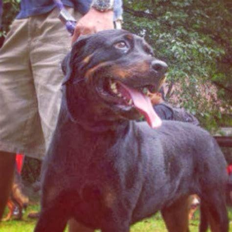 Makanan Anjing Yang Tinggal Dlm Rmh Royal Canin Indoor 15kg because i said so bruce tintin