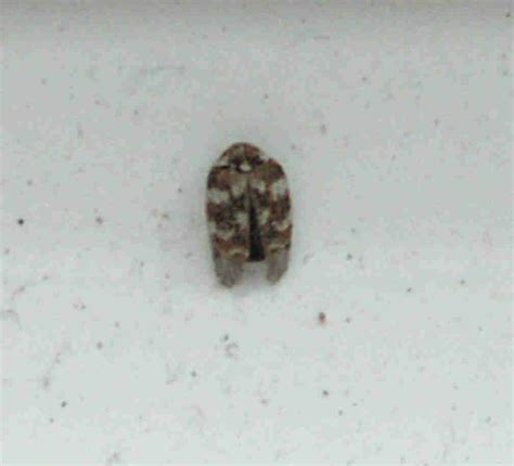 Bedroom Bugs | bedroom bugs photos and video wylielauderhouse com