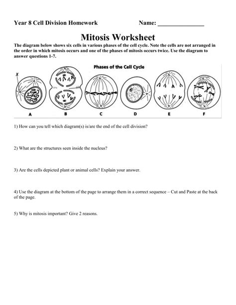 Stages Of Mitosis Worksheet Answers by Phases Of Mitosis Worksheet Answers Geersc