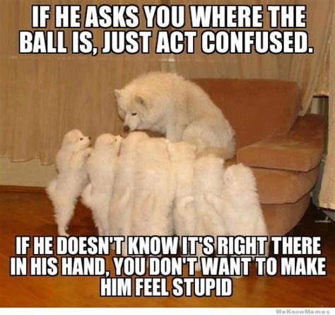 Confused Dog Meme - 33 all time best funny dog pictures with captions