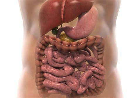 magen darm grippe blut im stuhl erkrankungen des magen darm traktes humanomed