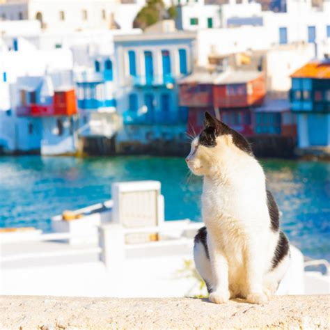 We Are The Cat On Tour by Take A Tour Of The Cat Islands Of The World Catster