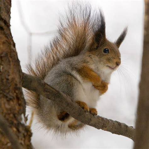 best 28 average expectancy of a squirrel squirrel