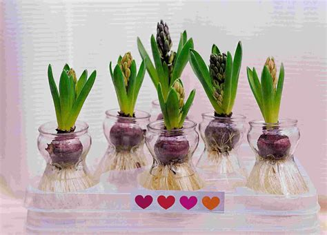 forcing tulip bulbs st patrick s day ideas for kids isnara com