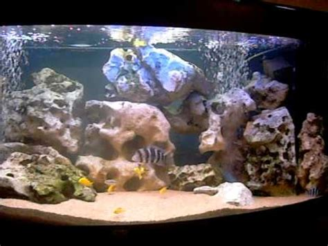 frontosa labidocromis juwel  aquarium ciclide tank