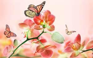 The Best Flowers flores rojas orqu 237 deas mariposas fondos de pantalla
