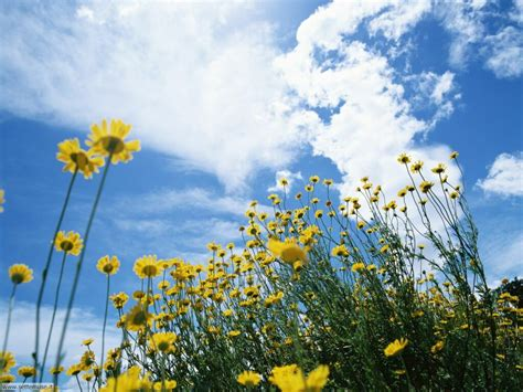 foto fi fiori fiori di prato 003 jpg