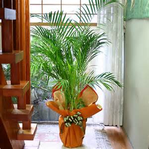 home decoration with plants plants