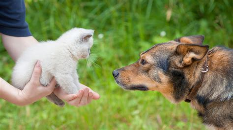dogs or cats do dogs or cats their owners more study says one pet s more devoted today