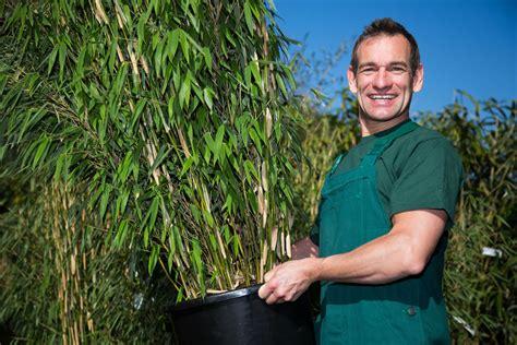 Bambou Balcon Vari 233 T 233 S Et Choix Du Pot Ooreka