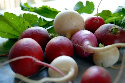 Black Radish Detox by 52 Best Images About Gall Bladder Health On