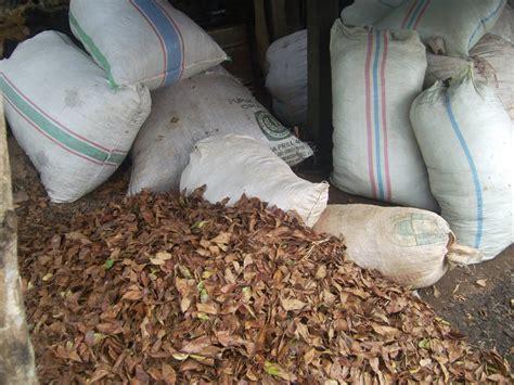 Minyak Atsiri Kenanga peluang usaha dari minyak cengkeh cbs agronusha