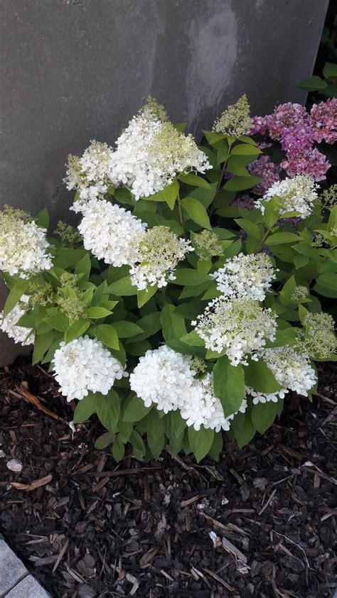 Garten Pflanzen Forum by Blumeninseln Im Garten Welche Pflanzen Seite 3