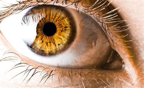 gold eye color best 25 ideas on golden