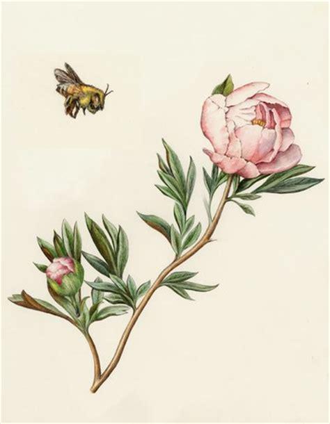fiori di ciliegio stilizzati murales decorazione fiori di ciliegio stilizzati quotes