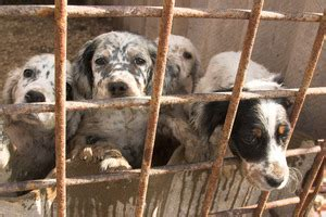 california puppy mill a california city fights puppy mills dogtime
