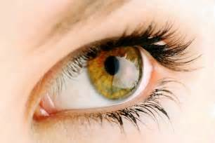 what color is hazel in humans hazel what determines hazel eye color
