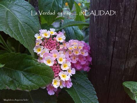 imagenes de jardines con frases frases e im 193 genes y tantas flores magdalena arqueros