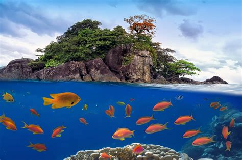 yacht colony photo of a coral colony on a reef top yacht charter