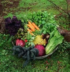 garden on a budget gardening