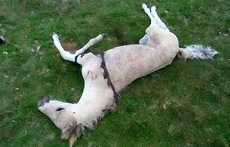 Jual Sho Kuda Di Bandung praktik sadis pemujaan setan di dunia yang bikin miris