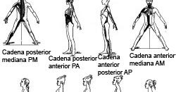 cadenas musculares y articulares método g d s fisioterapia y osteopat 237 a colmenar viejo m 233 todos de