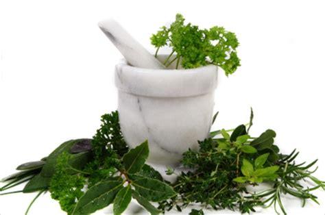 maklumat herba herba semulajadi malaysia