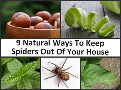 Ways To Keep Spiders Out Of Your House How To How To Keep Spiders Out Of The House