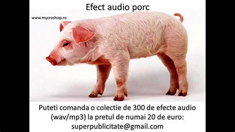 Pig With Sound efect audio porc pig sound effects