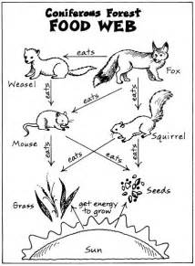 25 Best Ideas About Food Webs On Pinterest Food Chains Food Chain Coloring Page