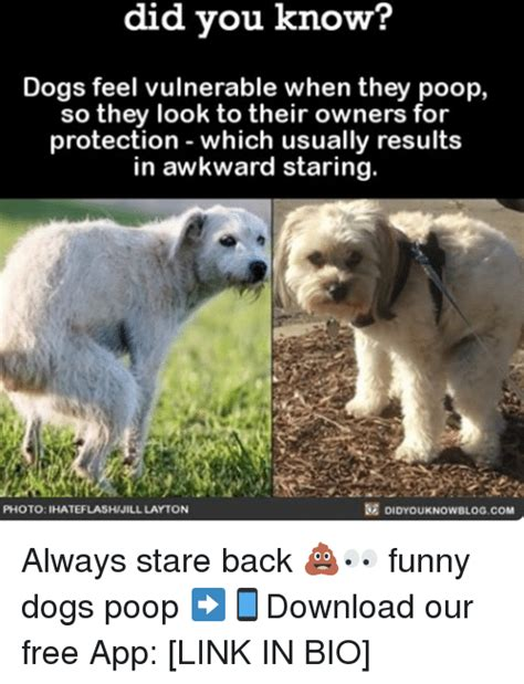 Dog Poop Meme - funny poop memes 28 images step into my office why yes that is cat poop business surprise