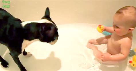 baby laughing at dog in bathtub your day will be made trust me and just watch this the