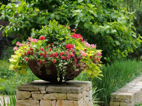 Potted Gardens Ideas Container Gardening Tips Ideas Flower Plant Container Gardening 187 Denbok Landscaping Design