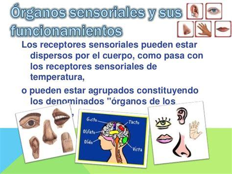 los receptores sensoriales receptores neuronales