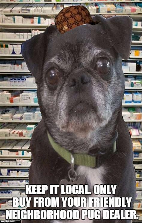 pug pharm pharmacy pug imgflip