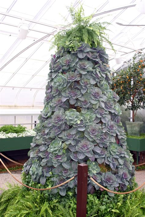 kale christmas tree longwood gardens all my boards are