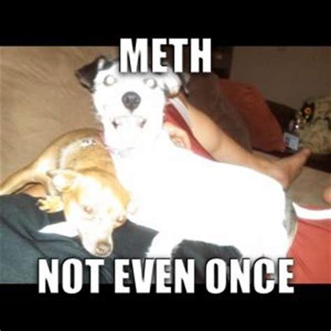 Crazy Face Meme - a meth psa meme i created from a crazy dog face funny