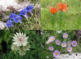 fiori baldo sul baldo 232 vietato raccogliere piante e fiori 15 di