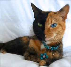 cats with different colored cats with markings yurbed
