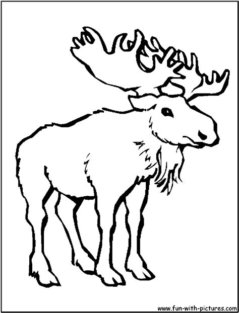 Moose Coloring Page Moose Colouring Pages