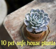 common house dogs 1000 ideas about common house plants on pinterest corn plant spider plants and