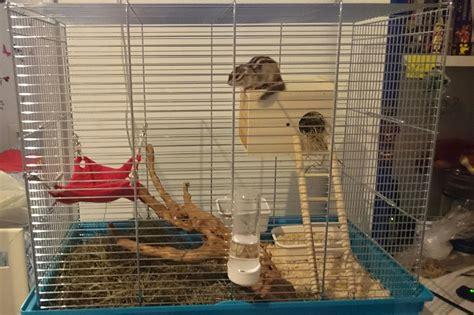 gabbia per scoiattoli fai da te gabbia di yui