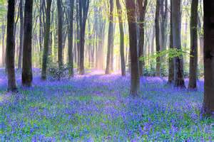 bluebell forest new workshop announced bluebell wood extravaganza doug chinnery photography